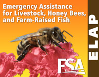 The ELAP Program provides emergency relief to producers of livestock, honey bees, and farm-raised fish.