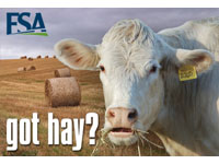 The Farm Service Agency's (FSA) electronic Hay Net Ad Service (HayNet) is an Internet - based service allowing farmers and ranchers to share 'Need Hay' and 'Have Hay' ads online.