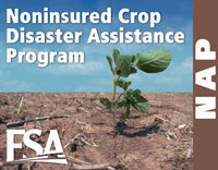 The Noninsured Crop Disaster Assistance Program provides financial assistance to producers of noninsurable crops when low yields, loss of inventory or prevented planting occurs due to natural disasters.
